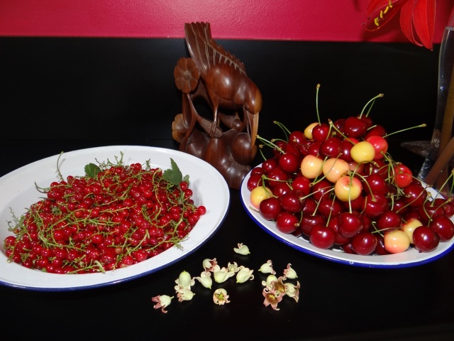 Summer abundance-redcurrants & cherries